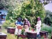 鈴木養蜂場